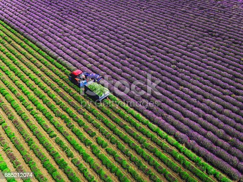istock Aerial view of Tractor harvesting field of lavender 685212074