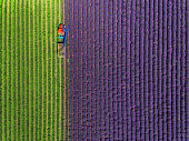 istock Aerial view of Tractor harvesting field of lavender 685212084