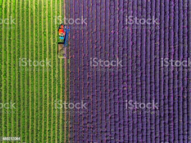 Aerial view of tractor harvesting field of lavender picture id685212084?b=1&k=6&m=685212084&s=612x612&h=d7gyxizp43 xjgpb4q3t3rwo6alzau9rvvaigimsfy4=