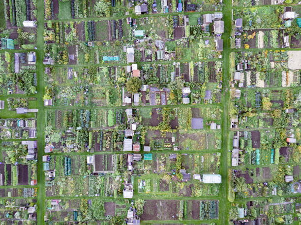 Aerial view of traditional English allotments, looking down stock photo