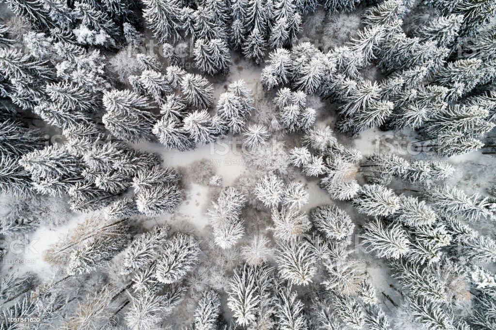 Luftaufnahme der Bäume mit Schnee bedeckt – Foto