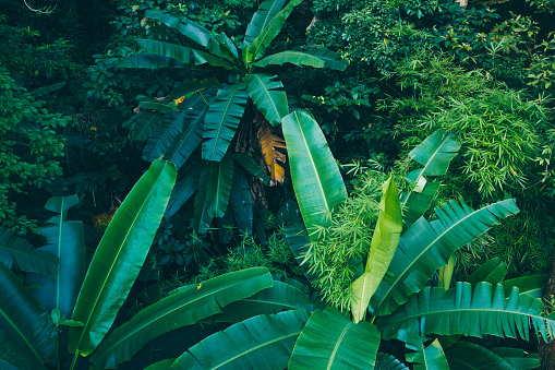 Aerial view of tropical forest in summer