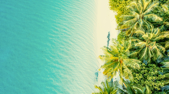 Aerial view of palm trees and sandy beach of tropical island,Maldives