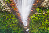 Aerial view of tropical waterfall river in dense green rainforest and fog, Tasmania, Australia