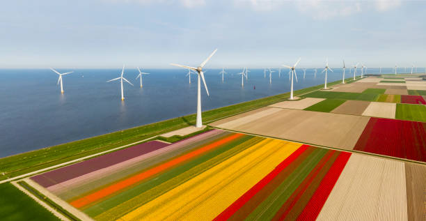 aerial view of tulip fields and wind turbines in the noordoostpolder municipality, flevoland - netherlands stock pictures, royalty-free photos & images