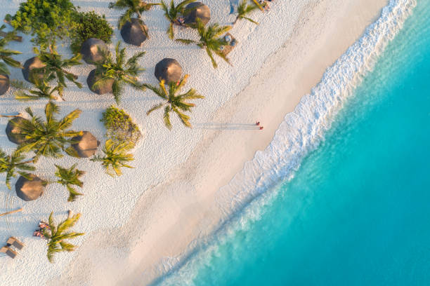 aerial view of umbrellas, palms on the sandy beach of indian ocean at sunset. summer holiday in zanzibar, africa. tropical landscape with palm trees, parasols, white sand, blue water, waves. top view - beach stock pictures, royalty-free photos & images