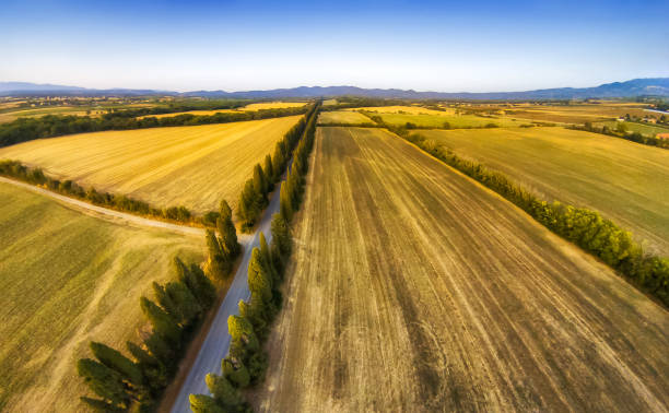 aerial view of viale dei cipresi cypresses tree road in Bolgheri. Tuscany - foto stock