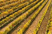 Aerial view of vineyard in autumn