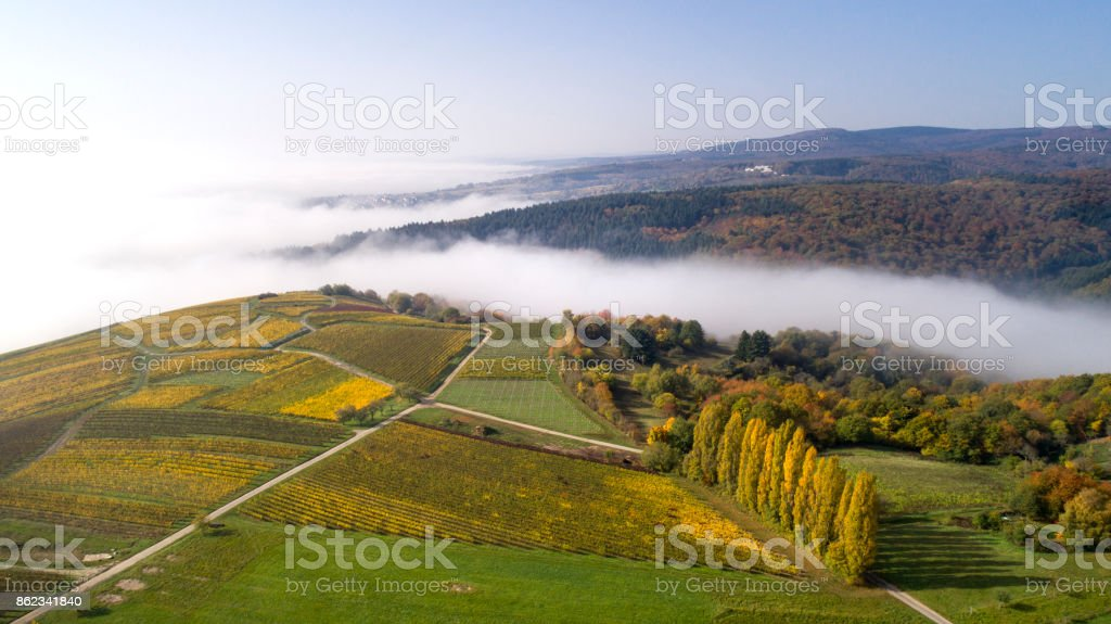 Aerial view of vineyards and fog in the Rheingau stock photo