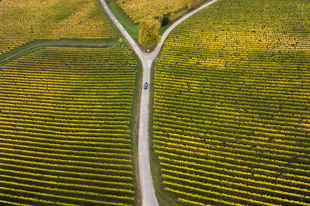Aerial view of vineyards and fork in the road Aerial view of autumnal vineyards and fork in the road fork in the road stock pictures, royalty-free photos & images
