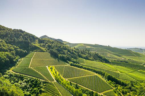 Aerial view of vineyards - Germany