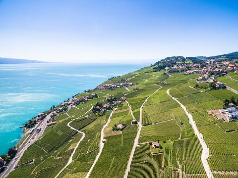 Aerial view of Vineyards in Lavaux region  Terrasses de Lavaux