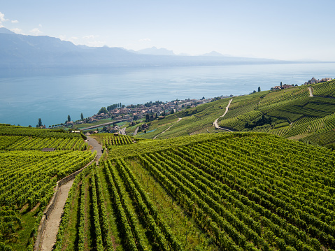 Aerial view of vineyards of Lavaux, UNESCO