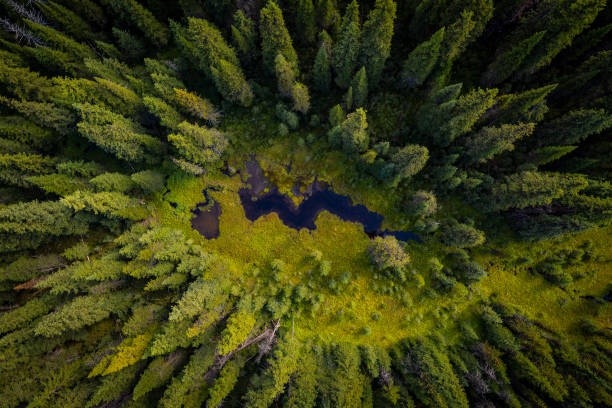 Aerial view of wetlands Wetland in forested area british columbia stock pictures, royalty-free photos & images