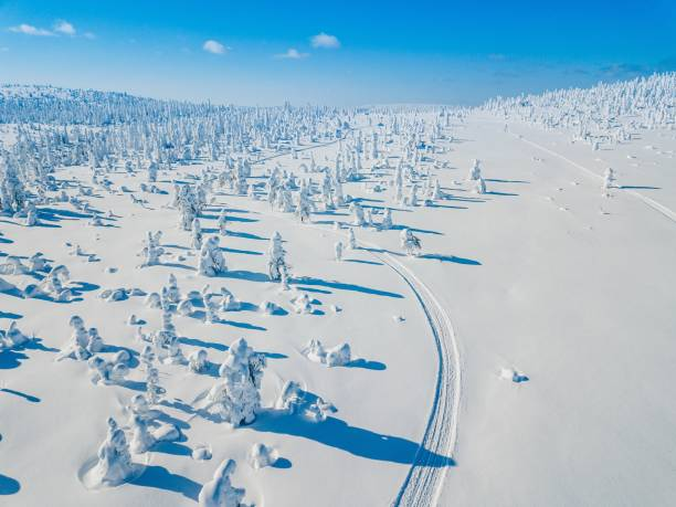 Aerial view of white winter forest with snow covered trees and rural road in Finland stock photo