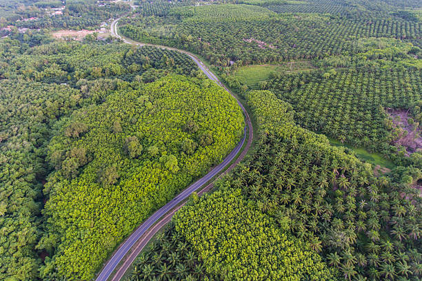Aerial view of winding road through lush green forests - Photo