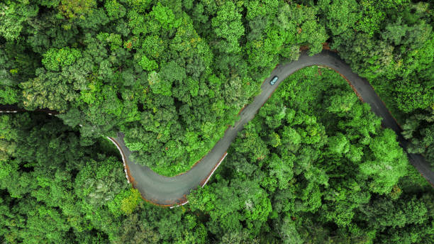 Aerial view of winding road trough the dense woods on the high mountain in Encumeada, Ribeira Brava, Madeira island. stock photo