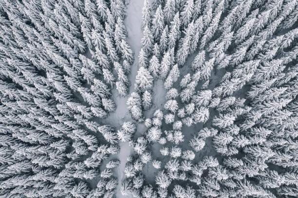 flygfoto över vintern skog täckt av snö och frost - pine forest sweden bildbanksfoton och bilder