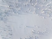 Aerial view of winter forest covered in snow in Finland, Lapland. Drone photography. Top view