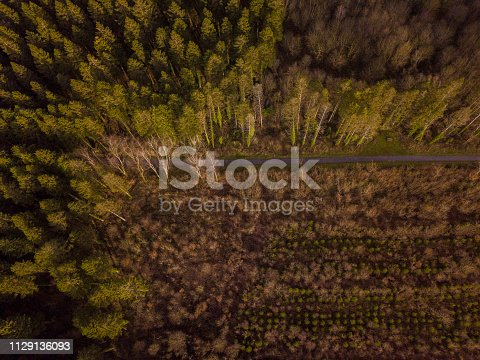831591456 istock photo Aerial view of woodland in winter 1129136093