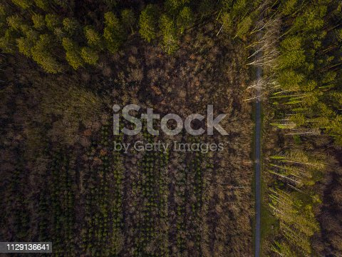 831591456 istock photo Aerial view of woodland in winter 1129136641