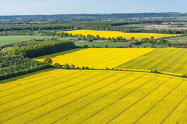 aerial view of yellow harvest fields aerial view of harvest fields in Poland oilseed rape stock pictures, royalty-free photos & images