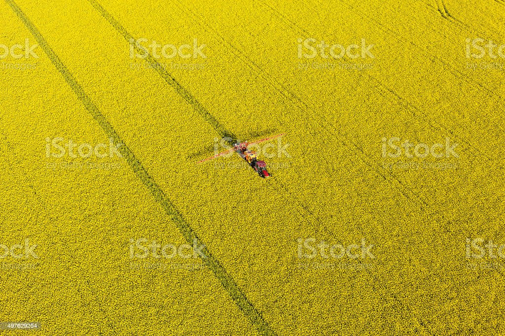 aerial view of yellow  rape harvest fields with tractor stock photo