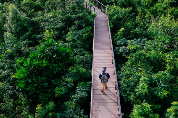 Aerial view of young man traveling and walking on the forest walkway trail - travel and recreation concept Aerial view of young man traveling and walking on the forest walkway trail - travel and recreation concept elevated walkway stock pictures, royalty-free photos & images
