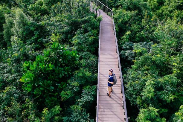 vue aérienne du jeune homme voyageant et marche sur le sentier de promenade forêt - voyage et loisirs concept - passerelle pont photos et images de collection