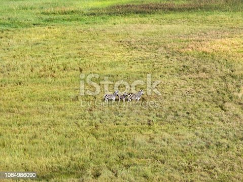 1137909085 istock photo Aerial view of zebra in bush grasslands in Delta Okavango, Botswana, Africa 1084986090
