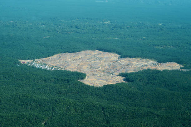 Aerial View Oil palm plantation in Aceh Indonesia Aerial View Oil palm plantation in Aceh Indonesia deforestation stock pictures, royalty-free photos & images