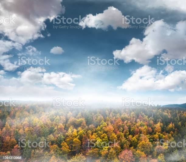 Photo of Aerial View On Autumn Forest