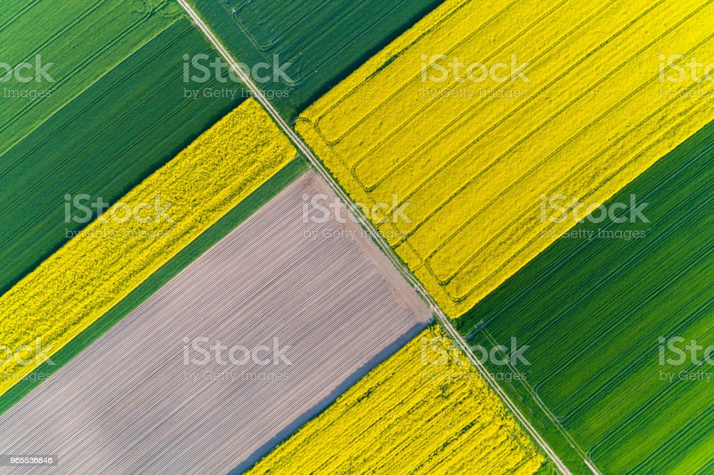 Aerial view on colza field stock photo