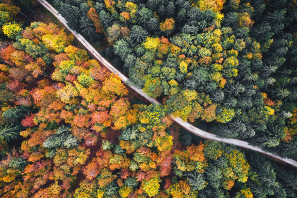 Aerial View On Country Road In Autumn stock photo