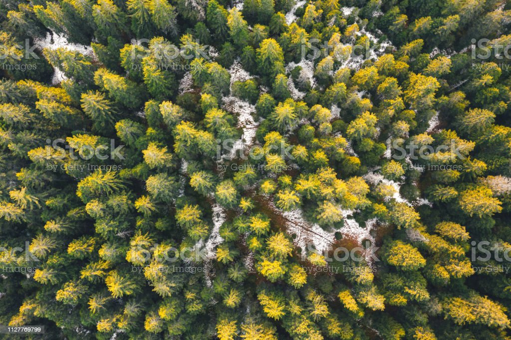 Aerial View On Pine Forest stock photo
