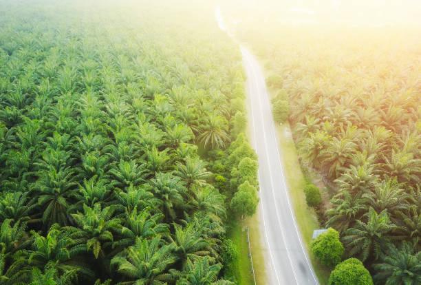 Luftaufnahme auf Derplantation von Palmen Hintergrund, Top-Ansicht Luftaufnahme des Palmenhains. – Foto