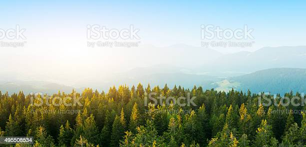 Photo of Aerial View On Spacious Pine Forest At Sunrise