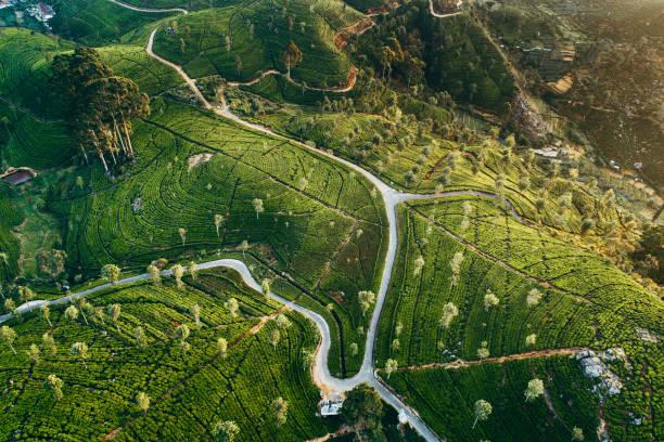 Vue aérienne sur la plantation de thé au Sri Lanka - Photo
