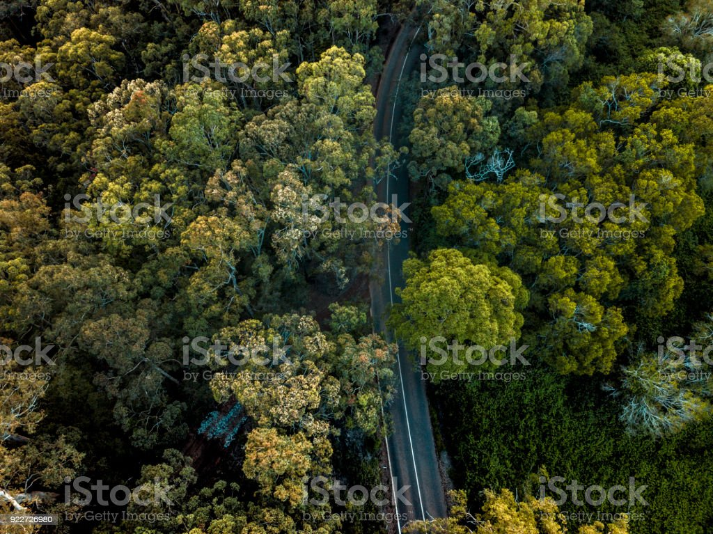 Aerial view on the forest in Australia stock photo
