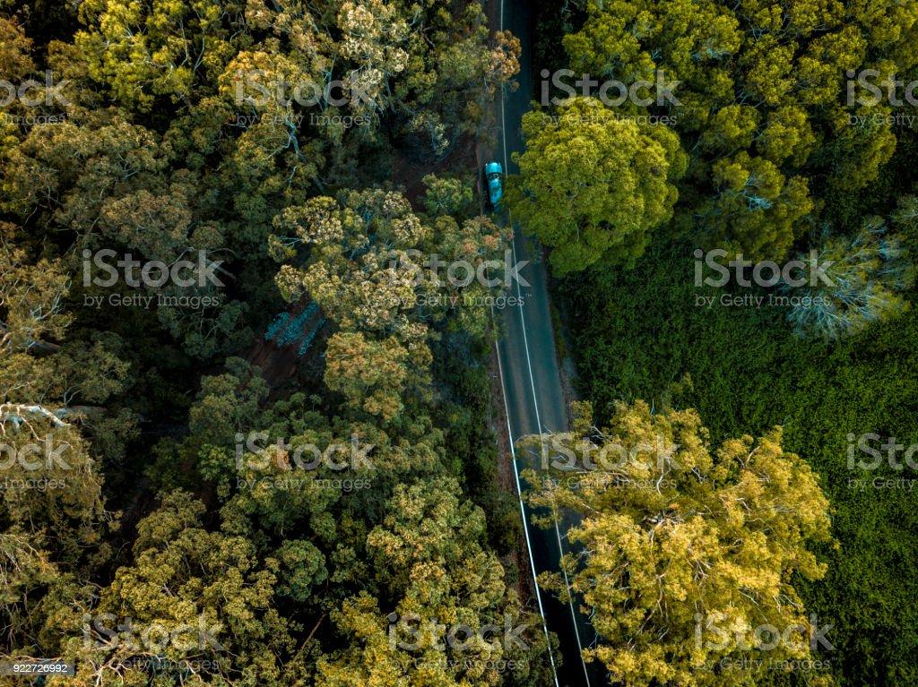 Blick auf den Wald in Australien – Foto