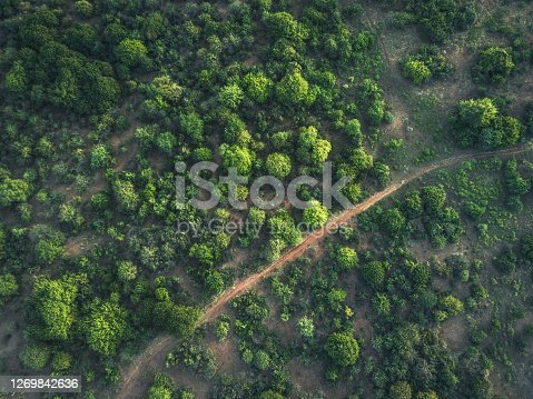 aerial view on the green trees in the bush land of lower zambezi area in Zambia