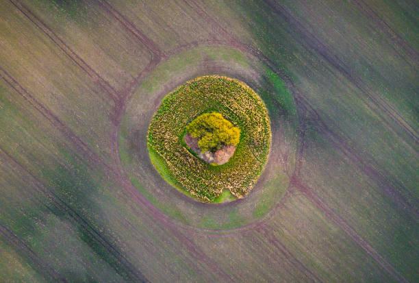 luftaufnahme über einen ernte kreis spot und baum in kultivierten feld - aerial view soil germany stock-fotos und bilder