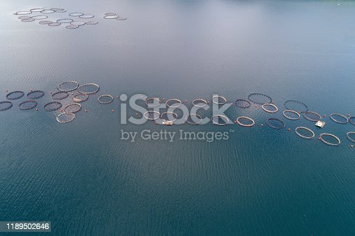 Drone point of view over a large fish farm, organic aquaculture and freshwater  fishing.