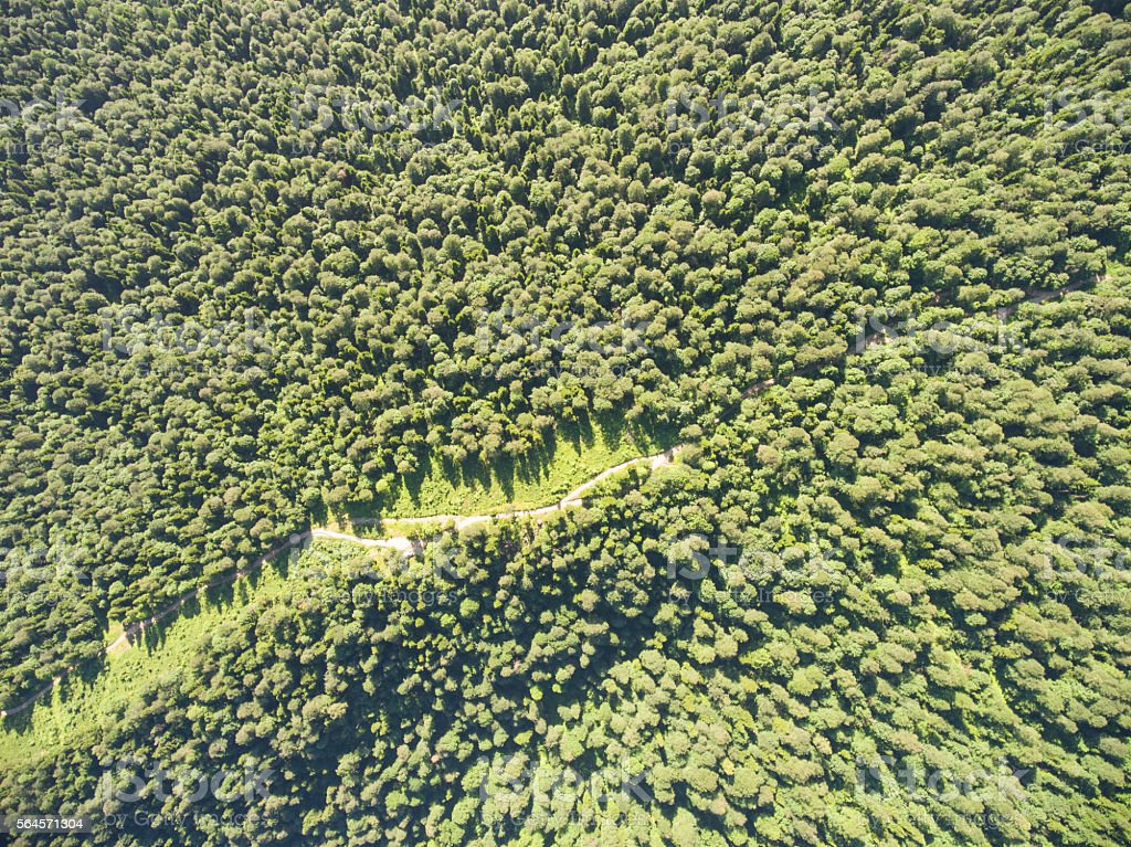 Aerial view over curve road in forest stock photo