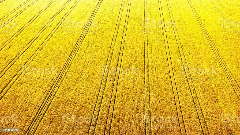 Aerial view over the agricultural fields stock photo
