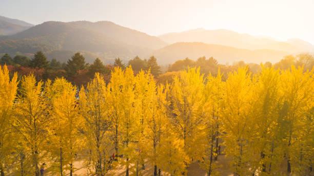Vista aérea. Amanecer de otoño en la isla de Nami, Seúl Corea - foto de stock