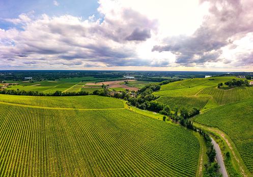 Aerial view, Sunset landscape, Bordeaux wineyard, Langoiran, France