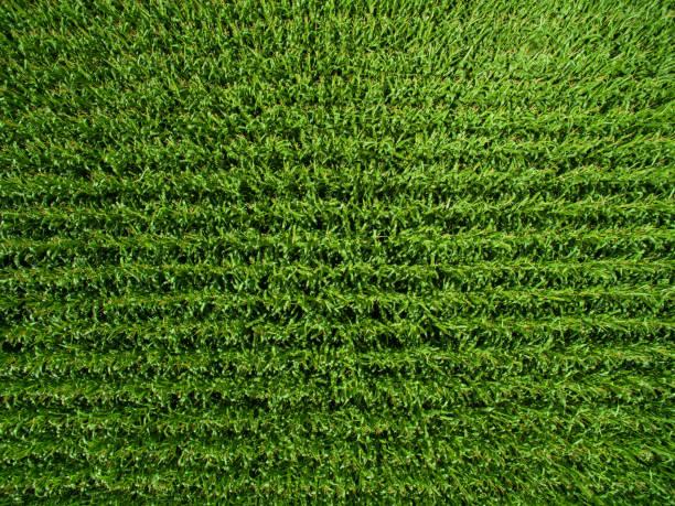 Luftbild Draufsicht des grünen Maispflanzen in einem Kornfeld in Deutschland – Foto