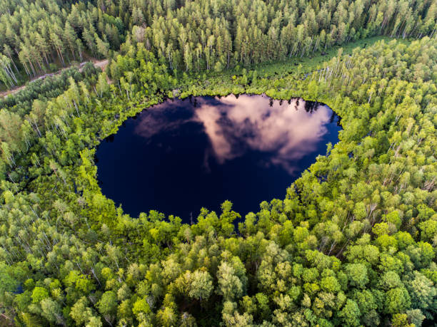 Aerial view. Wild forest lake in Lithuania stock photo