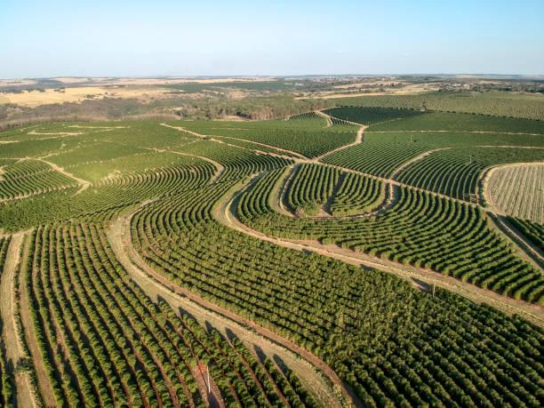 luchtfoto van groene koffie veld in brazilië - plantage stockfoto's en -beelden